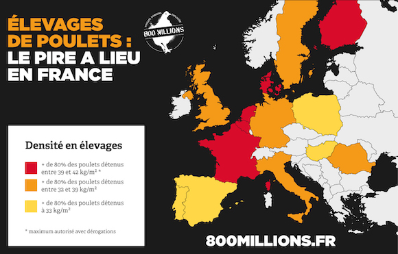 carte Europe élevage poulets