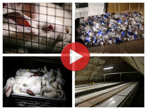 Vidéo d'enquête L214 sur l'élevage des lapins en France