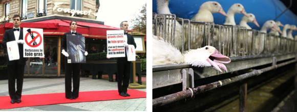 Mobilisation contre le foie gras à Paris
