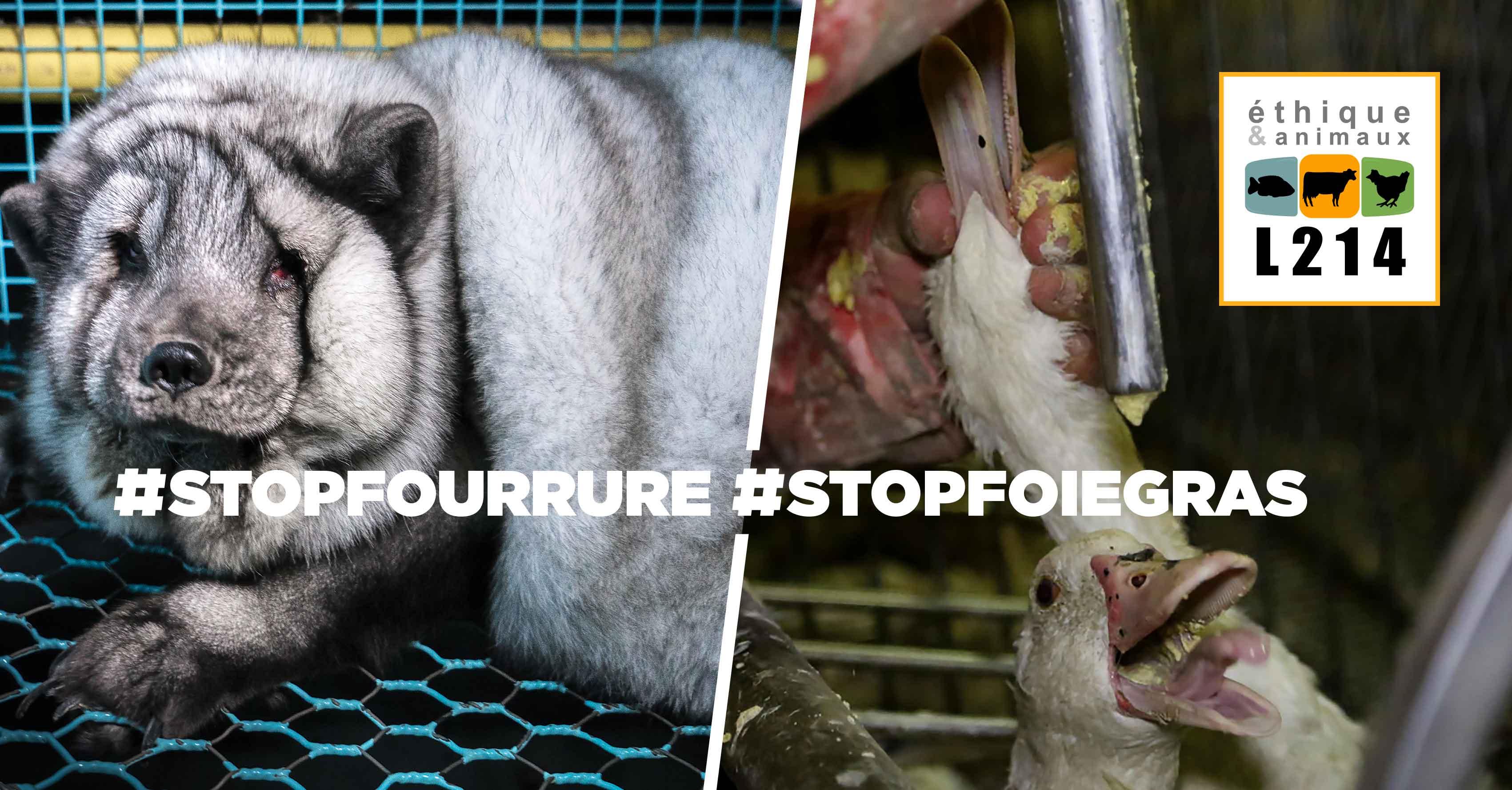 Fourrure, foie gras, même torture!