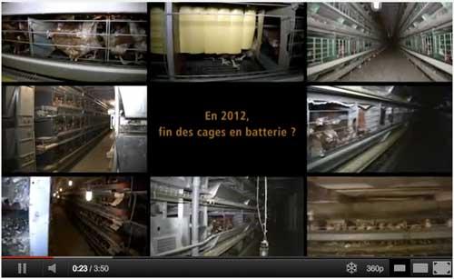 En 2012, la fin des cages de batterie pour les poules pondeuses
