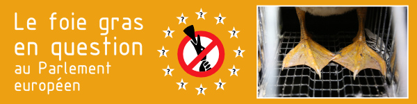 Des eurodéputés demandent l'interdiction du gavage en Europe