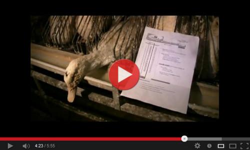 vidéo d'enquête en ateliers euralis