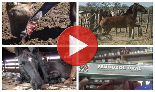 Vidéo d'enquête sur la viande de cheval