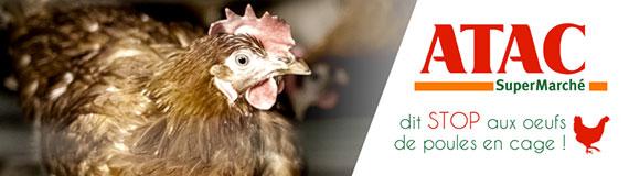 Atac stoppe la vente d'oeufs de poules élevées en cage