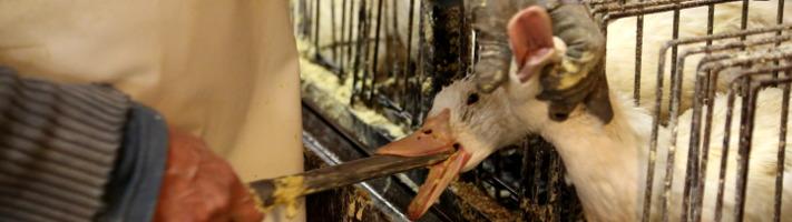 Le foie gras au parlement européen en question