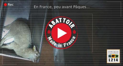 Enquête à l'abattoir de Mauléon-Licharre