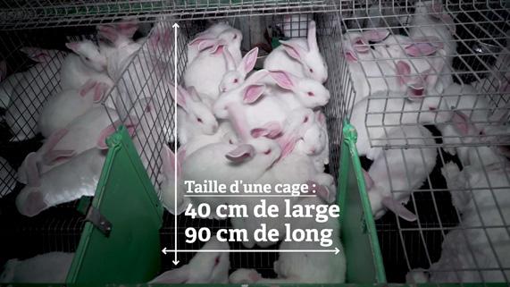 des cages de lapins surpeuplées