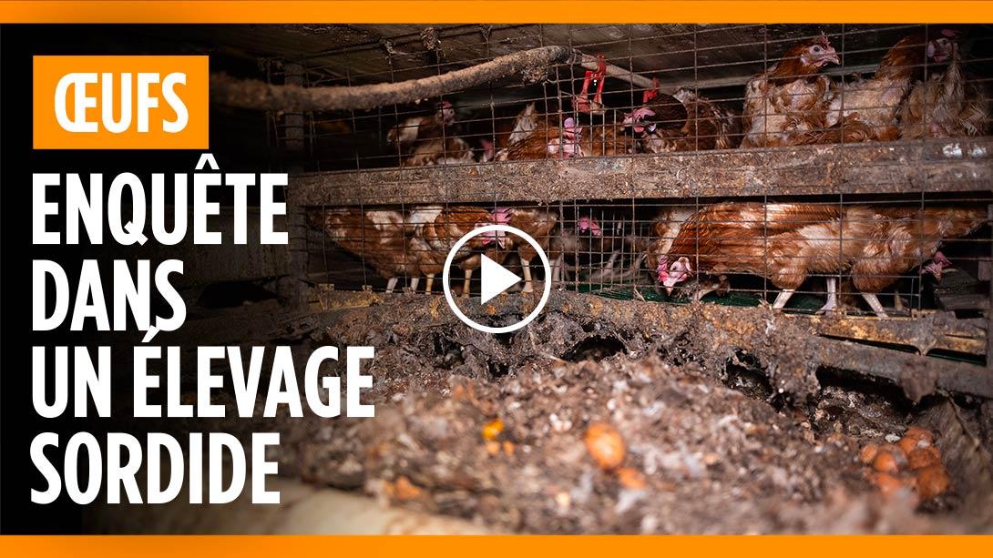Elevage de poules pondeuses du domaine du Mesnil Saint Martin