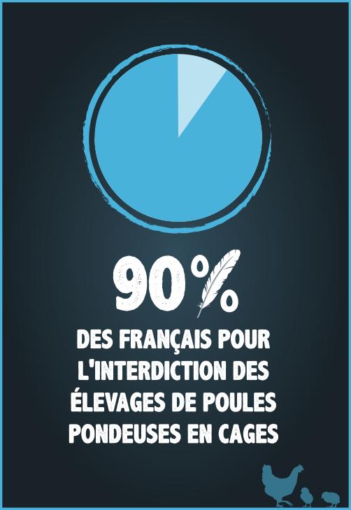 90% des français favorables à l'interdiction de l'élevage en cage des poules pondeuses.