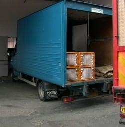 transport de chevreaux