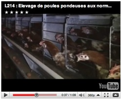 Video poules pondeuses norme 2012