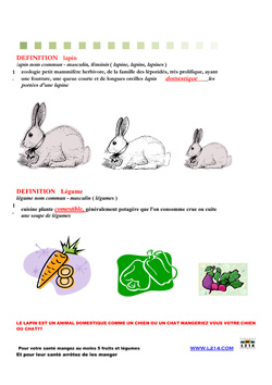 Affiche lapin 24