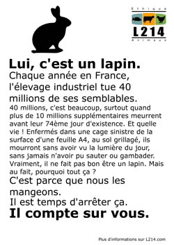 Affiche lapin 3