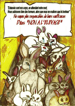 Affiche lapin 4