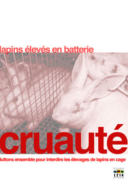 Affiche lapin 6