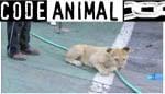 Video code animal