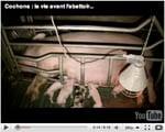 video porc L214