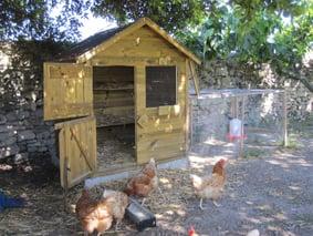 recueillir des poules pondeuses thique et animaux. Black Bedroom Furniture Sets. Home Design Ideas