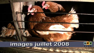 images poules juillet 2008