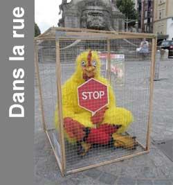 cage poule pondeuse