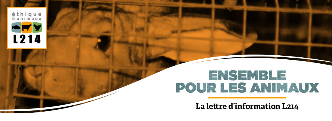Lettre d'info L214 lapins Orylag