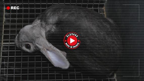 Vidéo lapins fourrure Dior Fendi Dolce Gabbana