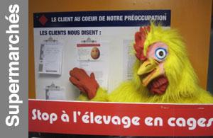Tournée poules pondeuses Nord et Paris