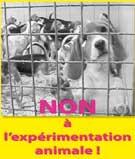 Manifestation la vivisection à Mézilles