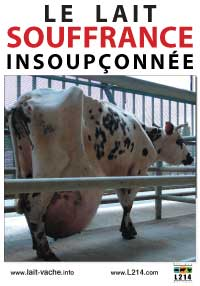 Non à l'élevage de 1000 vaches !