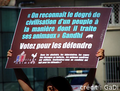 Action Politique & Animaux