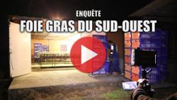 enquête de L214 sur le foie gras