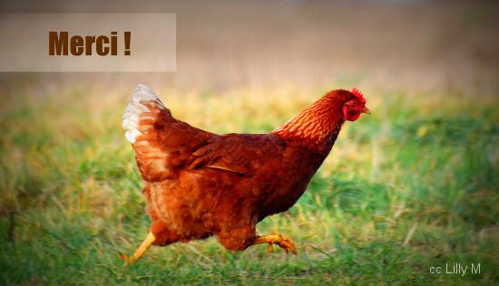 une poule courant dans l'herbe