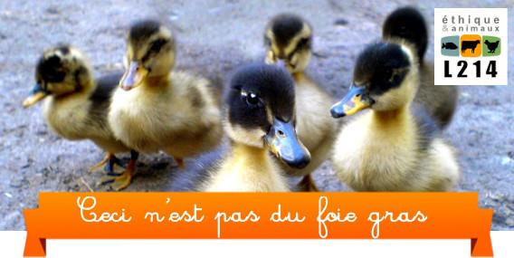 Ces animaux ne sont pas du foie gras
