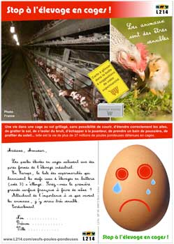 carte contre l élevage en cage des poules pondeuses à remettre aux grandes surfaces