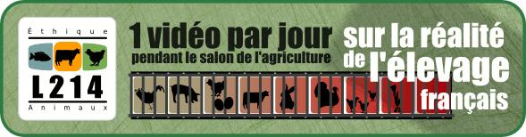 Pendant le salon de l'agriculture, une vidéo par jour sur la réalité de l\élevage en France