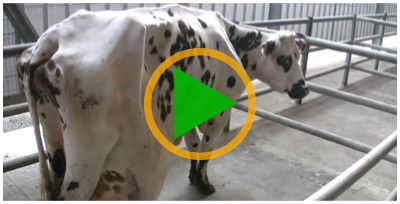 Vidéo sur les marchés aux bestiaux