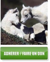 Adhérer / Faire un don