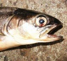 Photo : poisson mort