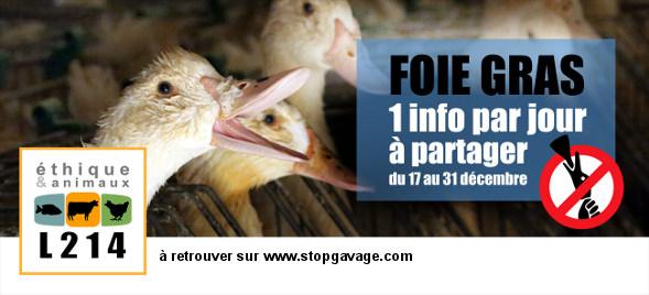 1 info par jour sur la production de foie gras