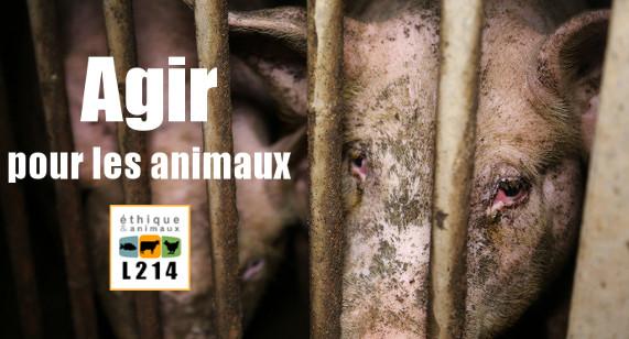 Banniere L214: Agir pour les animaux