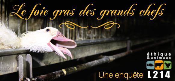 bannière foie gras des grands chefs