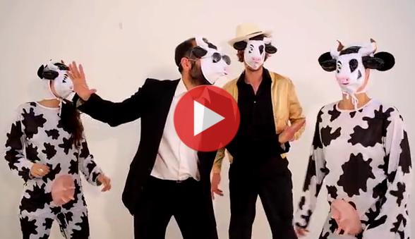 Clip des vaches en colère