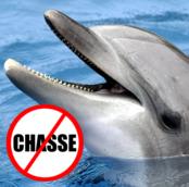 Manifestation pour les dauphins de Taïji
