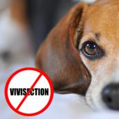 Manifestation contre la vivisection