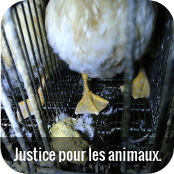 Foie gras Ernest Soulard