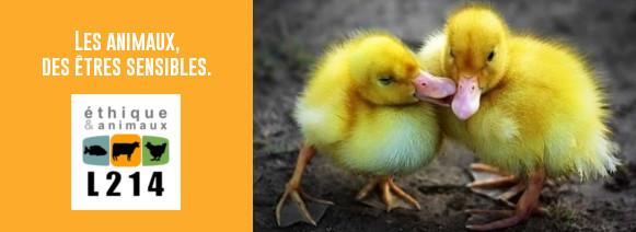 Les animaux, des êtres sensibles