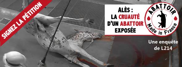 Alès : la cruauté d'un abattoir exposée