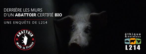 Le Vigan : la cruauté d'un abattoir certifié bio exposée