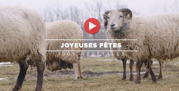 Vidéo animaux heureux